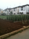 orderly veggie patch