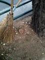 biwa stump